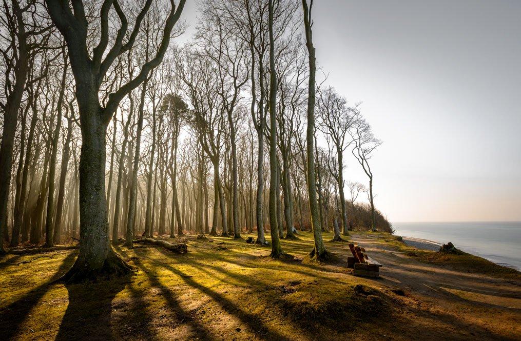 Winterlicher Buchenwald in Nienhagen an der Ostseeküste, Mecklenburg-Vorpommern
