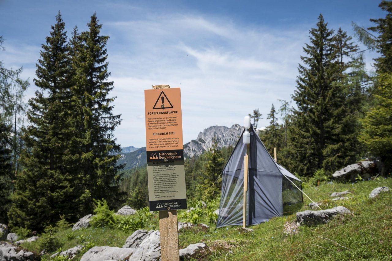Forschungsfläche auf einer Alm im Nationalpark Berchtesgaden
